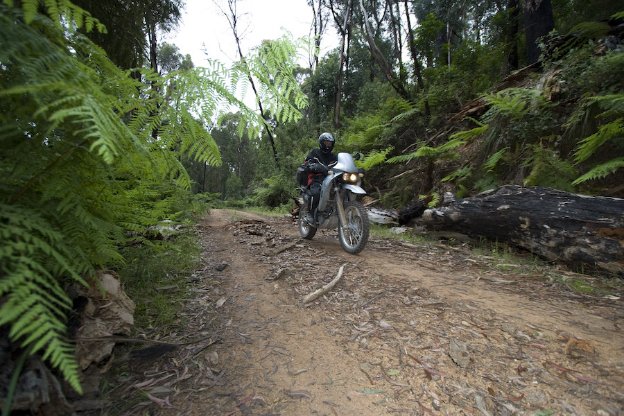 detour_foresttrails